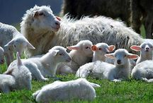 """Jehovah Is My Shepherd...""-Psalms 23:1a / by Laurie Garza"