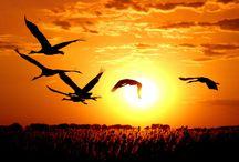 Zachody i wschody słońca