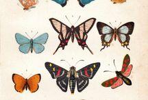 Beetles, butterflies, birds in art
