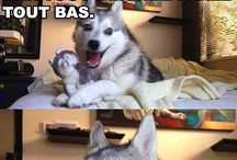 Blague de chien