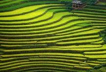 Vietnam.  Thailand.   Bankog.