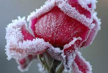Припорошенные снегом...