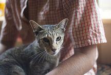 Cat Articles