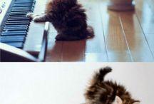Bébé chat ouuuuuuuuuuu