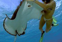 Foto dal mondo subaqueo
