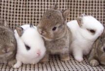Bunnies / by Maddie Howard