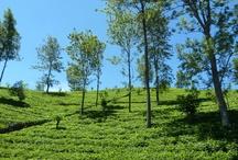 Hill Country / Des photos de la région du Hill Country, au Sri Lanka.