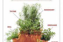 Herb Board