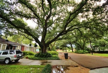 Baton Rouge Garden District Photos / The beauty of Baton Rouge Garden District Photos