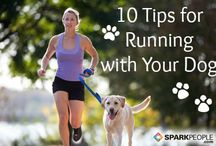 Doggie Exercise Tips / Tips to keep your dog happy, healthy and in shape