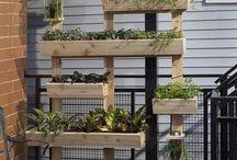 festival garden ideas
