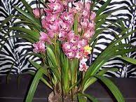 Kwiaty / Kwiaty doniczkowe