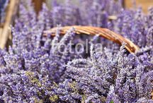 Lavender   Flowers / All kinds of this awesome flowers
