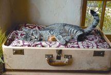 Kattepus