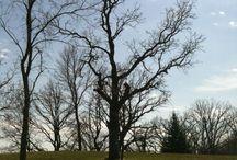 Trees {art inspiration}