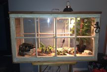 Snake Cage Ideas