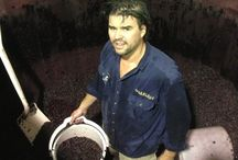 Action in the Winery / All about vintage!