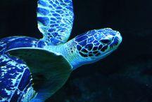 Sea creatures <3