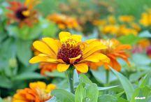 Természet / Nature / Virágok, növények és természet / Flowers, Plants and Nature
