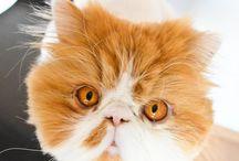 Muffy & Cosmos / My kittens