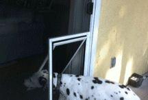 Puertas para perros