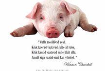 Eesti Tsitaadid / Eesti tsitaadikogu