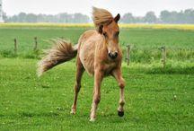 Pferde Horses / Fotos rund um Pferde