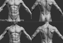 Male anatomy / Male anatomy reference