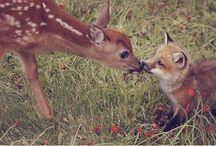 Animals that melt my heart  / by Kristy Hirsch