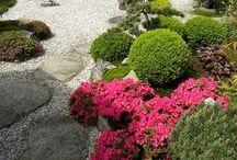 japonská tahrada