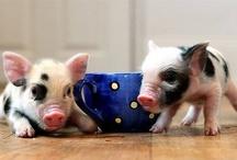Pig's!! / by Sherry Bernat