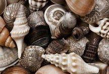 Conchiglie/Sea shells