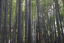 Japan / Places