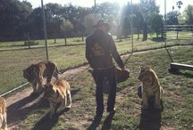 "Randy ""The Tiger Man"" / Randy ""The Tiger Man"" @ Dade City's Wild Things"
