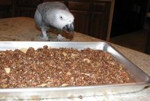PARROT FOOD RECIPES.