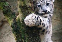Animal love!