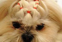 peinados peluquería canina