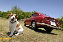 Honda Dogs