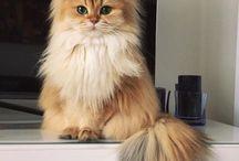 ノルウェイジャン猫