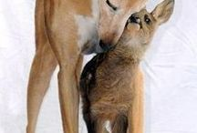Animaux que j'adore / animals