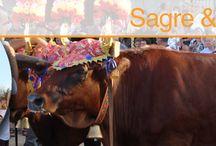 Festas of Ogliastra / All the traditional Festivals of Ogliastra