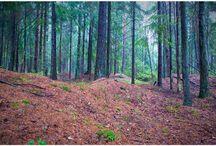 Nature / Norwegian Wood