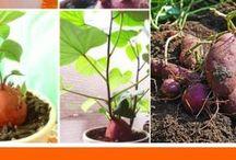 Gartenanbau Obst Gemüse usw.