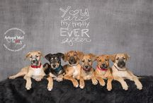 Shelter and Rescued Pet Photography / A board featuring photographers that donate their time and talent to help homeless pets find a home.