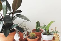 Plants♥