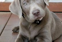 My Future Pup