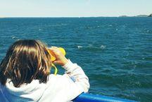 Marine Mammal Safari / Save The Harbor Save The Bay's Marine Mammal Safari  Tour.