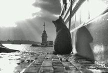 Beautiful foto