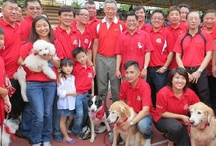Dog Training  / Waggie's Pet Care offers the most successful and comprehensive dog obedience training courses ever available in Singapore since 1985. Waggie's Pet Care is the #1 dog training school in Singapore.