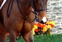 Pferde Pferde Pferde